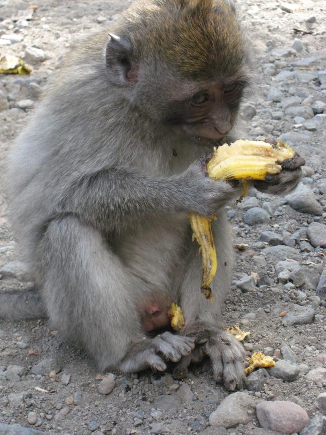 I love Banana's!