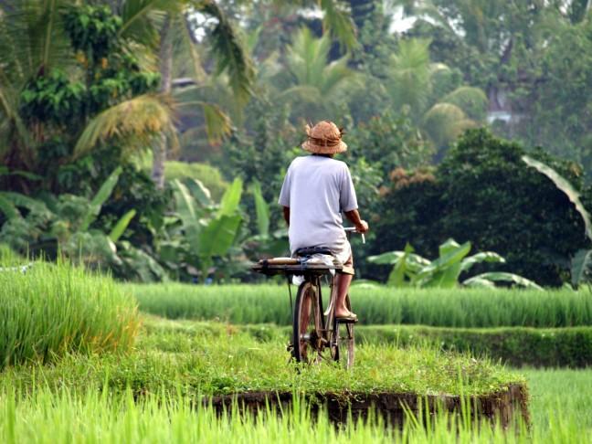 Een stukje fietsen in de rijstvelden