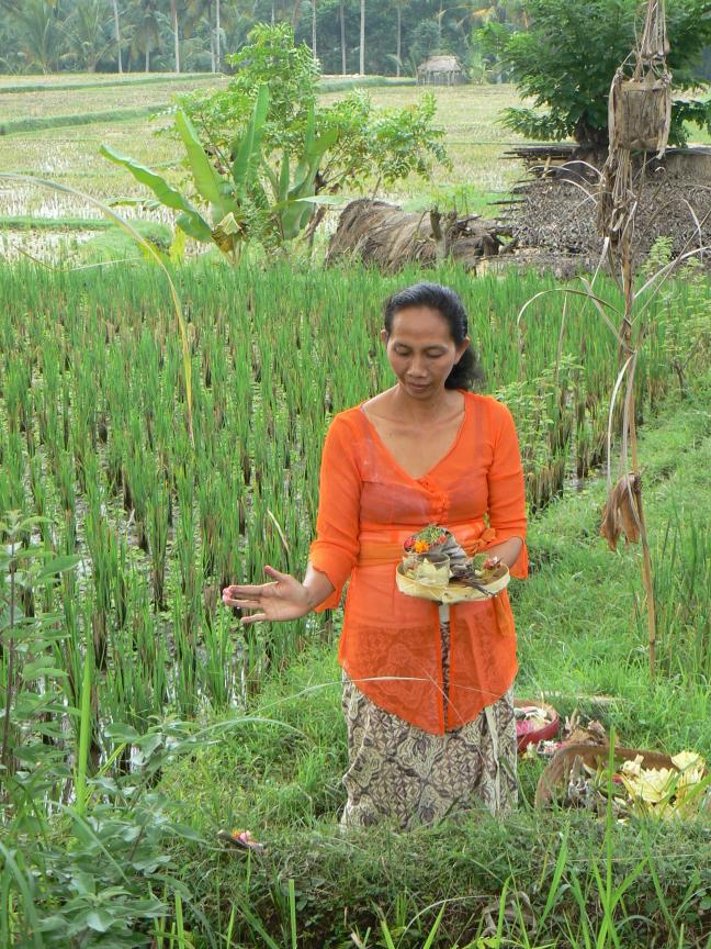 Offeren in de rijstvelden
