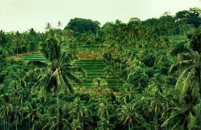 Trapjes vol rijst en palmbomen