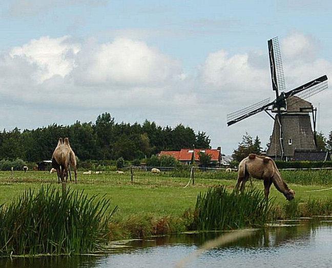 Hollandse kost