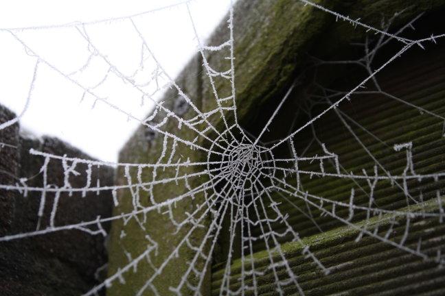 spinneweb in de winter