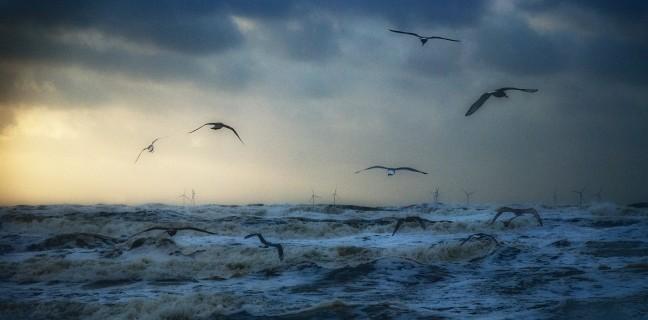 Woeste zee met meeuwen en windmolens
