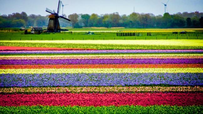 Lente en Tulpen (2)