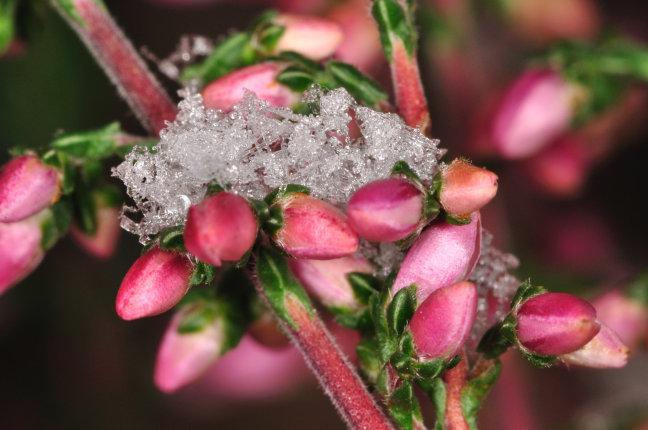 Bekroning  winter