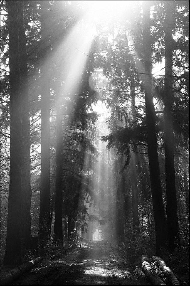 Eternal light...