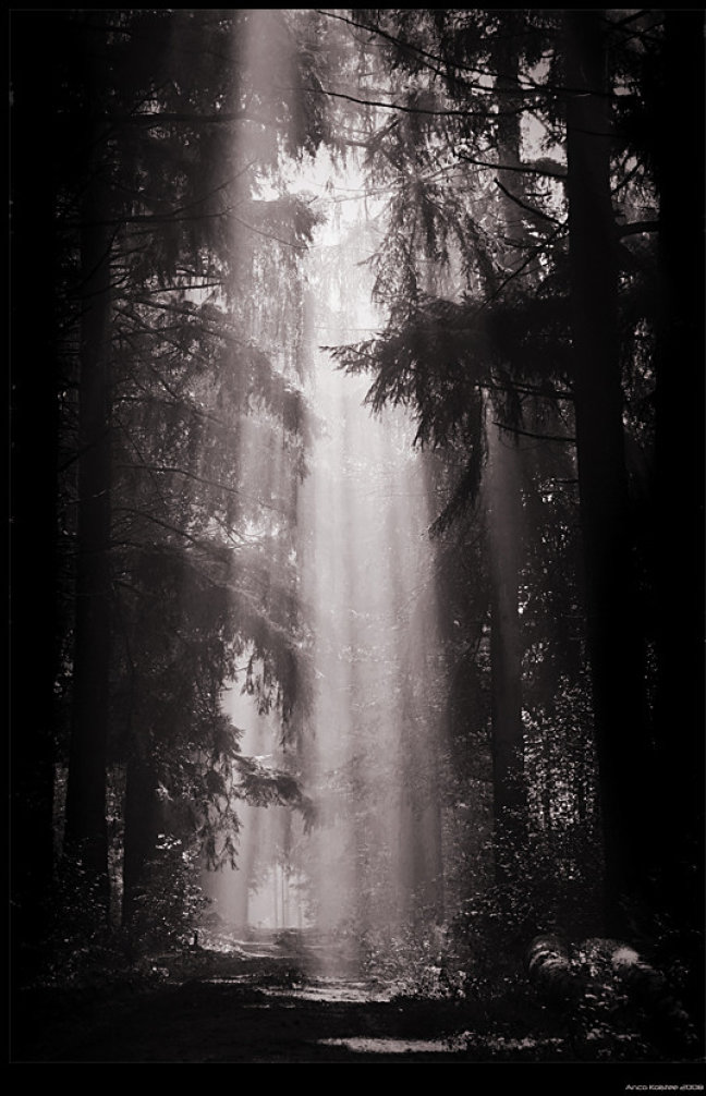 A forest...