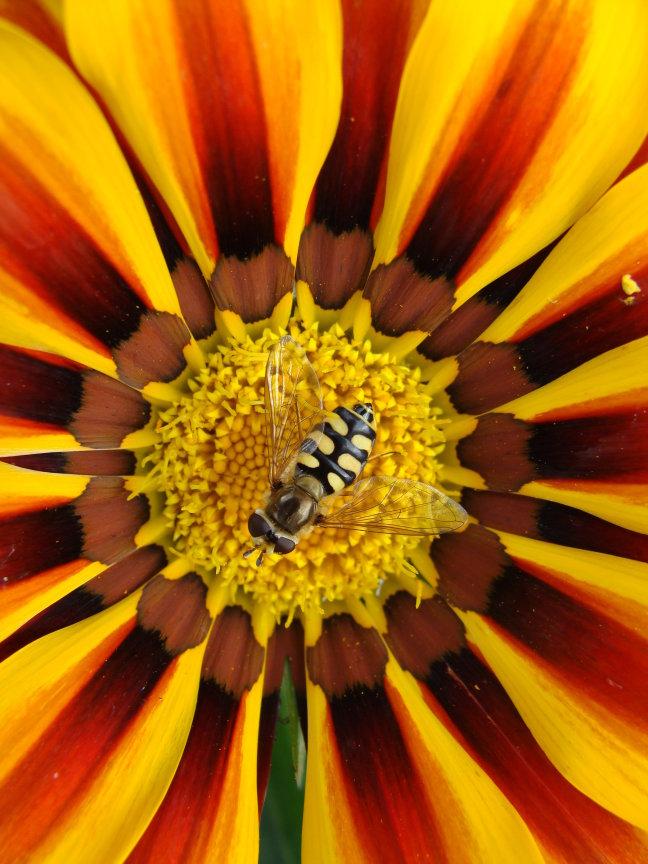 Vrolijke bloem