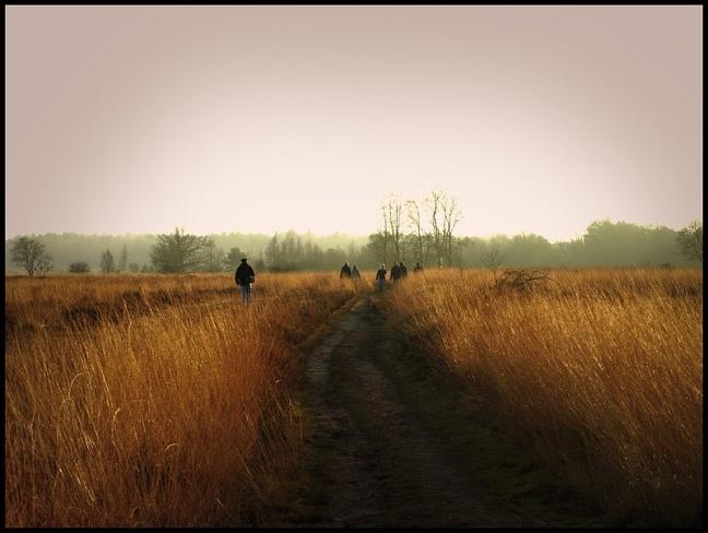 Gouden velden