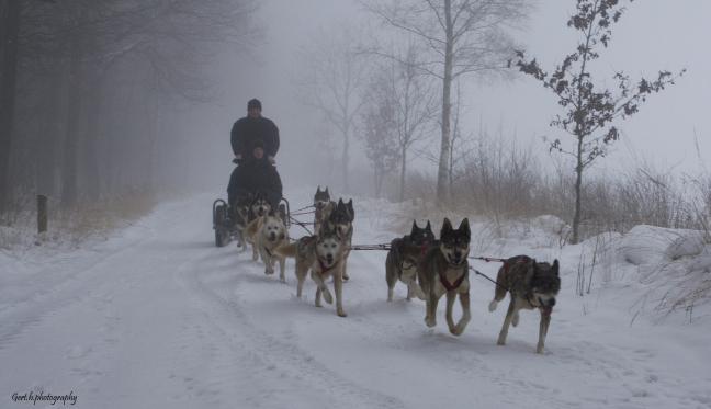 Huskies in de mist