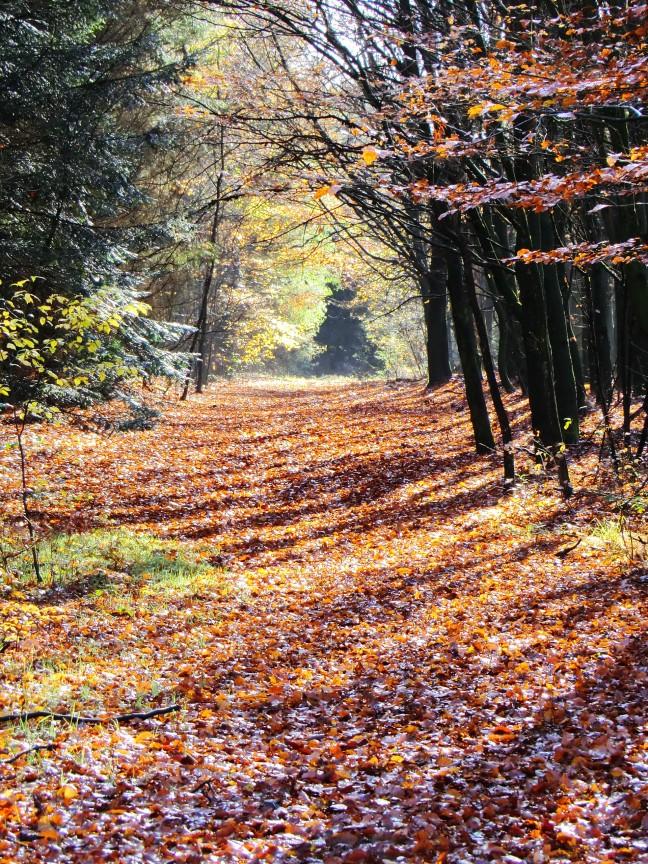 Herfst in Drents Friese Wold