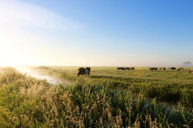 Friese landschappen bij ochtendgloren