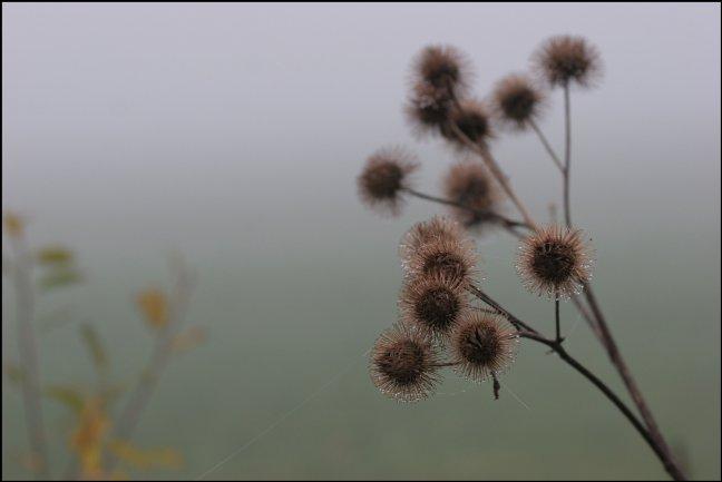 Mist in Nederland