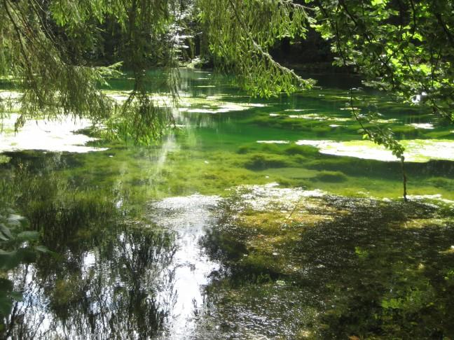 Ardennen, Samree, dichtbegroeid meer