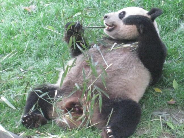 Panda ontbijt.