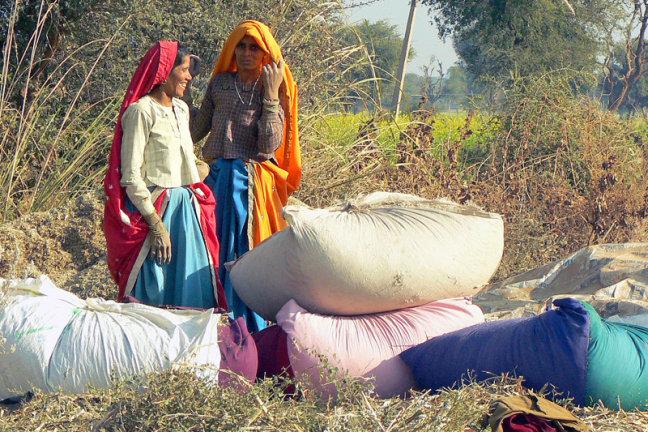 Vrouwen met oogst wachten op vervoer
